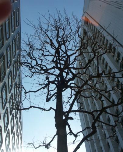3.丸の内仲通り:街路樹-01D 05.jpg