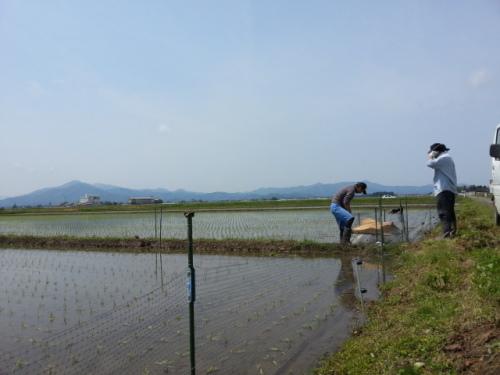 鴨農法1.jpg