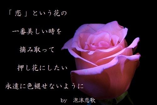 6泡沫恋歌フォト短詩押し花.jpg