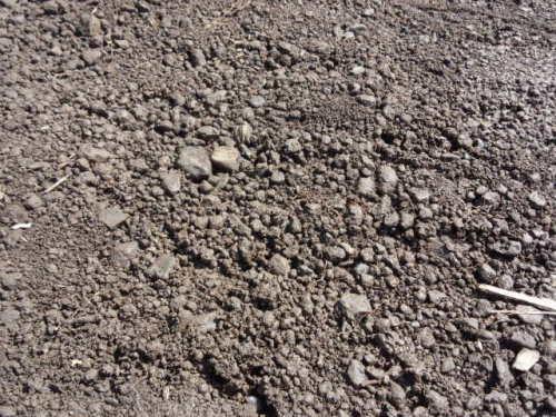 02ニンジンの土づくり表面