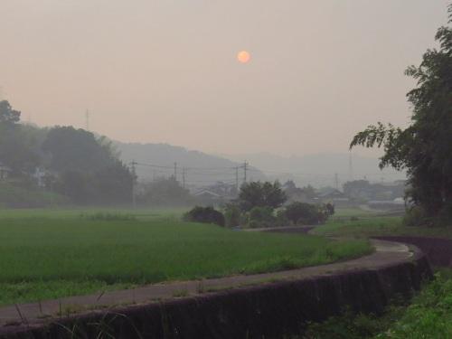 里山の朝_9506.jpg