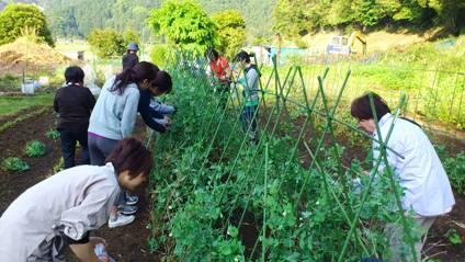 収穫体験.JPG