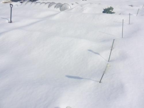 02家庭菜園と大雪