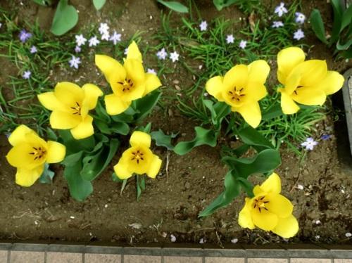 庭の花5.JPG