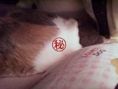 人間寝~01.jpg