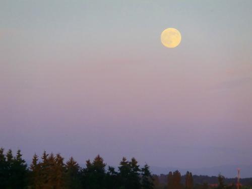 one day bofore full moon.jpg