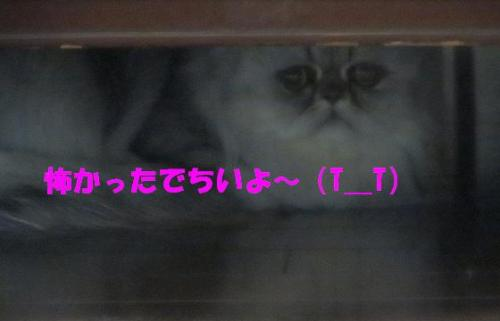 IMG_0170.JPG