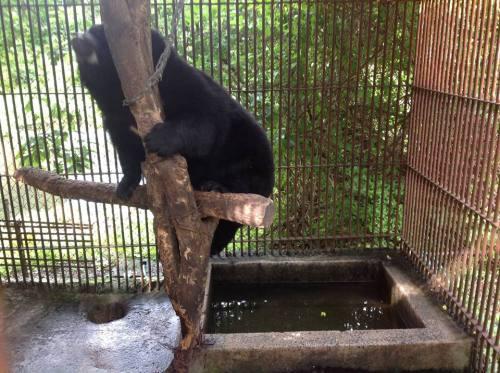 熊 1.jpg