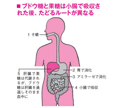 果糖の処理.jpg