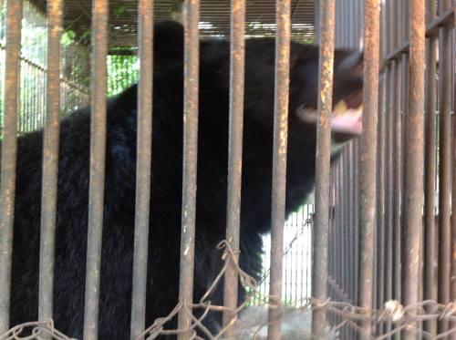 熊 3.jpg