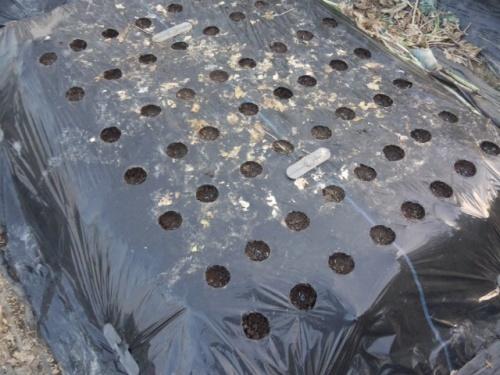 03ゴボウ用に畔板を埋め込んだ畝