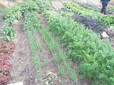 家庭菜園.jpg