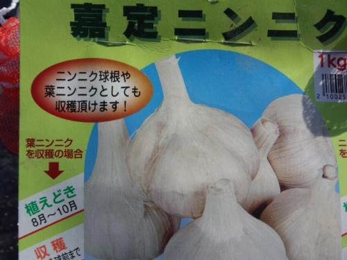 04ニンニク「嘉定種」は葉ニンニクも栽培可能
