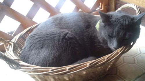 かご猫ジョニー 6・14・2012.jpg