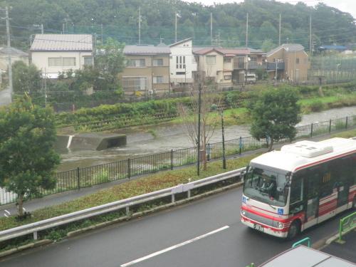 野川 (2).JPG