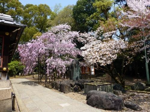 2017・4・11御香宮の桜1-14%.jpg