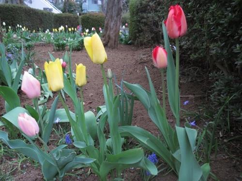 庭の花4.JPG