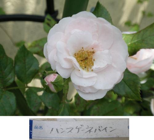 P6211069-1.jpg