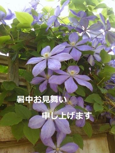 暑中お見舞い blog.jpg