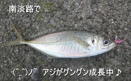 淡路島釣果11月.jpg